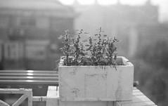 20161207bessarfskopar7.jpg (hedilee) Tags: 120filmbw 23° 69 6x9 730s blackandwhite shanghaigp3 voigtlander bessarf bessafoldingcamera kodakhc110b skopat105f35 vintagecamera