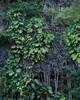 5D4_9220_DPP.Comp2048 (SF_HDV) Tags: canon5dmarkiv canon5dmark4 5dmarkiv 5dmark4 5dm4 haena haenabeachpark kauai hawaii