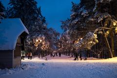 Winter Fun (`TOMS`) Tags: latvia riga mezaparks winter snow fun evening night white blue people tree trees outdoor nature park parks nikon d3200 afsdxnikkor35mmf18g f18g f18 city