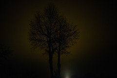 """Day 60/365_The Tree II (Frdric Cottens - Photographie """"brute"""") Tags: light pollution tree color nikon d750 highiso day60 365 switzerland"""