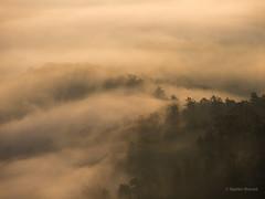 Swirls and rays (JKMroczek) Tags: mist fog forest ray swirls summer mountains landscape monteacuto lato canoneos5dmarkiii ef70200mmf4lisusm weather outdoor clouds misty sunrise