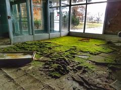 why not grow moss as your carpet (tsodan03) Tags: abandonedplaces abandonedhospital abandonedohio abandoned abandonedbuildings moss naturetakingover