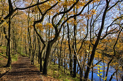 November (amber654) Tags: england derbyshire linacre linacrewoods autumn fall season trees leaves golden reservoir water path brown nikon nikond5100 d5100 18105 november tomwaits song lyric songlyric outdoor wood woodland landscape tree foliage