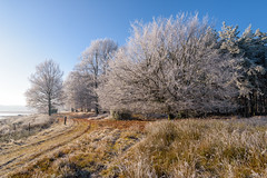 een Rijp landschap (Pieter ( PPoot )) Tags: npdwingelderveld rijp bevroren mist kou