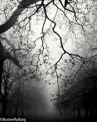[ breathe ]      #Tree #Treeline #TreeObsessed #Branches #Autumn #AutumnLove #Brumous #Fog #Nature #NatureLover #InstaNature #Life #Breathe #Aesthete #Frame #Silhouette  #BlackAndWhitePhotography #Mono #Potd (Sarwat Baig) Tags: life nature mono silhouette autumn treeline fog autumnlove aesthete blackandwhitephotography brumous breathe naturelover branches instanature tree potd treeobsessed frame