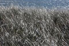 161010-5934-Chatham (Sterne Slaven) Tags: plimothplantation roosters spiderwebs oldburialhill pilgrims clamdiggers sanddunes barnstable taunton salem lynn sexynude sunhalo fullmoon sterneslaven tide waves water fountain 1600s wampanoag mayflower pelt harbor chathamma seals ocean atlanticocean coastal newengland actors