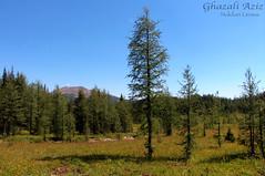 Banff - Healy Pass (Ghazali (Orang Malaya Di Calgary, Canada)) Tags: banff nationalparks healypass