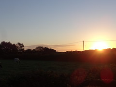 What a Difference a Day Makes (ART NAHPRO) Tags: sunrise sussex cow cattle bullock meadow pasture fiels