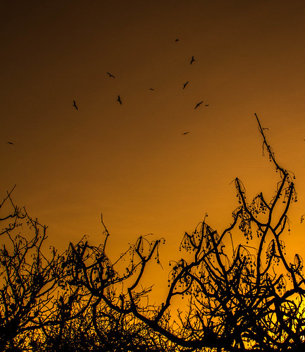 Sunset Frigates