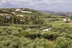Platanias 1,5, Crete (Knut-Arve Simonsen) Tags: hellas kreta crete mediterraneansea chania  platanias middelhavet grekenland  kaptara iqri