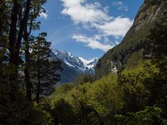 373 - Vue dans la forêt à The Chasm