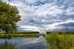 Clouds In My Water (Alfred Grupstra Photography (bussy until 30 octobe) Tags: clouds landscape reed reflection trees wervershoof noordholland nederland nl