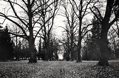Grlitzer park (Diaffi) Tags: grlitz park graveyard allee analog film trees bume selfdeveloped zeissikonzm blackandwhite monochrome hmm