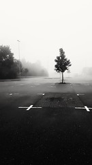 Mist (alexandrakarlsson171) Tags: blackandwhite mist fog dimma svartvitt