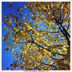 Little by little (edit eye) Tags: bahai abdulbaha autumn blue compassion encouragement faith fall growth leafs light love quote self spirituality story yellow