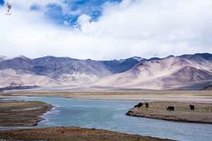 IMG_0666 (Archna Singh Photography and Design Studio) Tags: canon ladakh zanskar jammukashmir khardungla rohtang tsokar india nature tropicaldesert buddhism