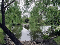 Through the willows (Denis Fox) Tags: glenroy open gardens 2016 water green pond breakfastbar willowsspring