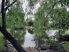 Through the willows (Denis Fox) Tags: glenroy open gardens 2016 water green pond breakfastbar willowsspring