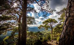 Puy de Chteauneuf (CyrilRly) Tags: montagne puy de dmes auvergne mont dore sancy saint nectaire paysage landscape randonne sky nature white tree trees