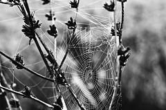 * (PattyK.) Tags: ioannina giannena giannina greece griechenland hellas ellada whereilive nikond3100 ilovephotography ipiccy october 2016 web nature blackandwhite amateurphotographer