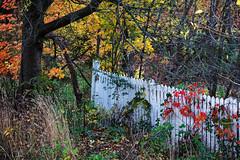 Canadian Fence (Flapweb) Tags: canada fence friday leaves autumn fallcolors