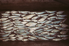 ( Nino) Tags: ai nikkor 50mm f12 s film 35mm 35 mm analog manual dof bokeh depth field 50 f12s canon nikon fish catch