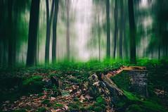 Le jugement dernier (Thomas Vanderheyden) Tags: abstract abstrait arbre brouillard brume colors couleur fog forest foret landscape nature paysage picardie thomasvanderheyden tree