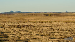 Tower and Missouri Buttes (kevin-palmer) Tags: nikond750 october fall autumn devilstower missouributtes moorcroft grass distant evening sunlight clear sunny blackhills wyoming nikon180mmf28 telephoto