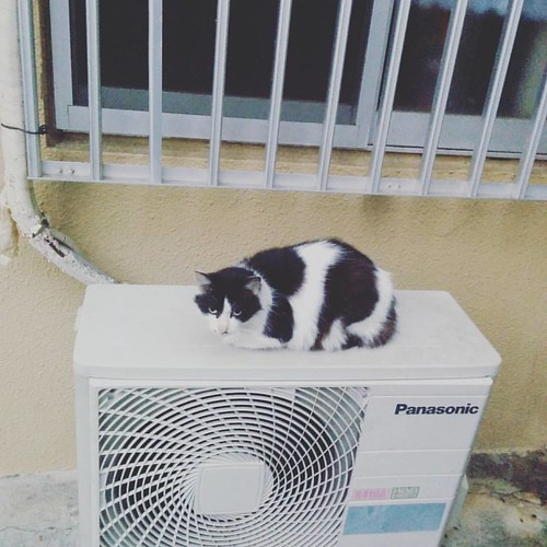 Panasonic cat