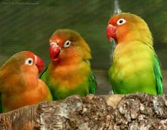 Pairi Daiza (Natali Antonovich) Tags: pairidaiza zoo belgium belgique belgie tradition park bird birds aparrot parrot
