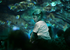Piggyback ((photo)shooting_starr) Tags: kid fish water ocean sea aquarium blue aqua people person china shadow surreal surrealism composite doubleexposure