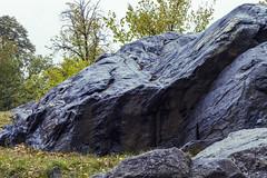 Bedrock (Joyce and Steve) Tags: bedrock rock blue schist park rain riversidepark newyorkcity manhattanschist manhattan autumn canoneos5dmarkiv