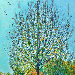 Bare Bones (Lemon~art) Tags: tree autumn fall leaves branches twigs birds colour manipulation texture