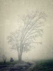 Sleepy Tree... (palma13) Tags: natur nature landscape winter weather fields field fog travel trees tree iphone art