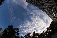The Sky over Nakanoshima, Osaka (nak.viognier) Tags: sky nakanoshima osaka   olympusepl3 lumixgfisheye8mmf35
