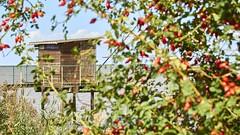 Cabane de pécheur (ec-photos(graphies)) Tags: cabane pécheur garonne fleuve girondesaintjulienbeychevellegirondefrancefr