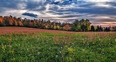 IMG_2525-26Ptzl1scTBbLGE (ultravivid imaging) Tags: ultravividimaging ultra vivid imaging ultravivid colorful canon canon5dmk2 farm fields clouds sunsetclouds scenic rural vista flowers trees autumn autumncolors