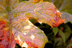 November 3rd (Rob Goldstein - slowly catching up) Tags: sanfrancisco california canon nature earth fineart space sphere wordpress photographie contemporary photooftheday autumn 2016 november artbyrobgoldstein