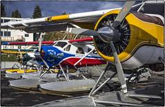 Beaver Row (NoJuan) Tags: floatplane seaplane kenmoreair kenmorewa 6d eos6d nikkor nikkorlens 55mmf28micronikkor manualfocuslensondslr eoswithmanualfocuslens dehavilland dhc2