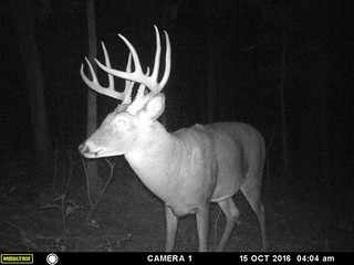 Kentucky Whitetail Hunt 29