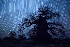 41-Botswana_2016 (Beverly Houwing) Tags: africa botswana desert islandoflostbaobabs kalahari mgadikgadipans saltpan night astrophotograhy sky stars milkyway galaxy longexposure startrail wideangle silhouette tree baobab