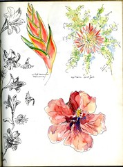 Gerbera and Fern and Wild Banana Heliconia (Cambridge Room at the Cambridge Public Library) Tags: flowerpieces flowers penandink watercolor watercolorspaintings arnolddorothy dorothyarnold cambridgemass cambridge cambridgemassachusetts artistjournals