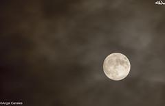 Gran Diosa (anluca1) Tags: luna nocturna noviembre 2016 granluna fotografa alcanales arroyodelaencomienda valladolid espaa canon eos7d astrofotografia astrologia