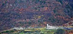 Grosio (SO) - Rupe Magna - Castello Vecchio (Giorsch) Tags: italy italien italia lombardei lombardia langbeardnaland provinciadisondrio grosio alpen alpi valtellina veltlin rupemagna castellovecchio felsbilder parcodelleincisioni valteline autumn autunno herbst herbstfärbung outdoor