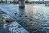 SALMON WEIR AREA GALWAY [RIVER CORRIB] REF--107581