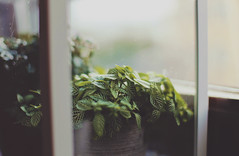 . (ammoniumchlorid) Tags: summer plants green window leaves soft bokeh pastel dreamy natureycrap canoneos6d ef50mmf114