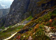 Path to Hemkund (__sandip__) Tags: nikon himalaya hemkund valleyofflowers govindghat brahmakamal uttarakhand ghangaria chamoli d7000 nikond7000 tiprakharak