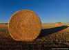 Golden Bale Shadows (Witty nickname) Tags: sunset summer landscape gold farming wideangle fields hay bales goldensunset haybales d800 settingsun longshadows goldandblue southernalberta albertalandscape 1424mm nikkor1424mmf28 nikond800