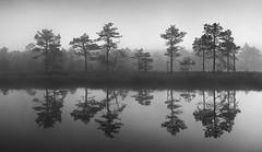 Without sunrise (Andrei Reinol) Tags: summer sky blackandwhite mist tree nature water monochrome fog pine forest europe estonia outdoor baltic serene nordic bog