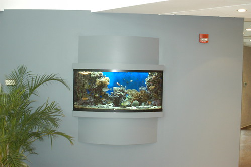 150 Gal Custom Reef - Corporate Office - CT
